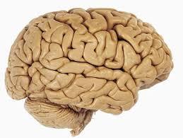 Jak se starat o náš mozek